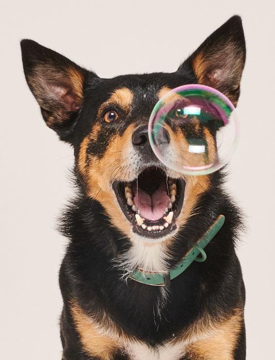 Winkelen Pawness Dog Image - Pawness
