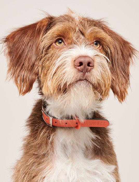 Afbeelding, Shop Pawness Dog - Pawness