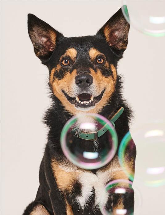 Natuurlijke Verzorgingsproducten honden