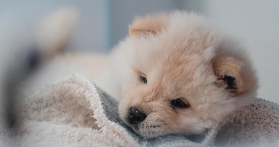 Pup wassen? 10 tips voor je pups eerste bad.