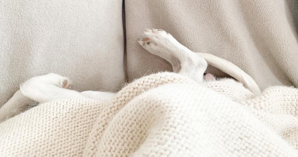 Hond ligt op deken
