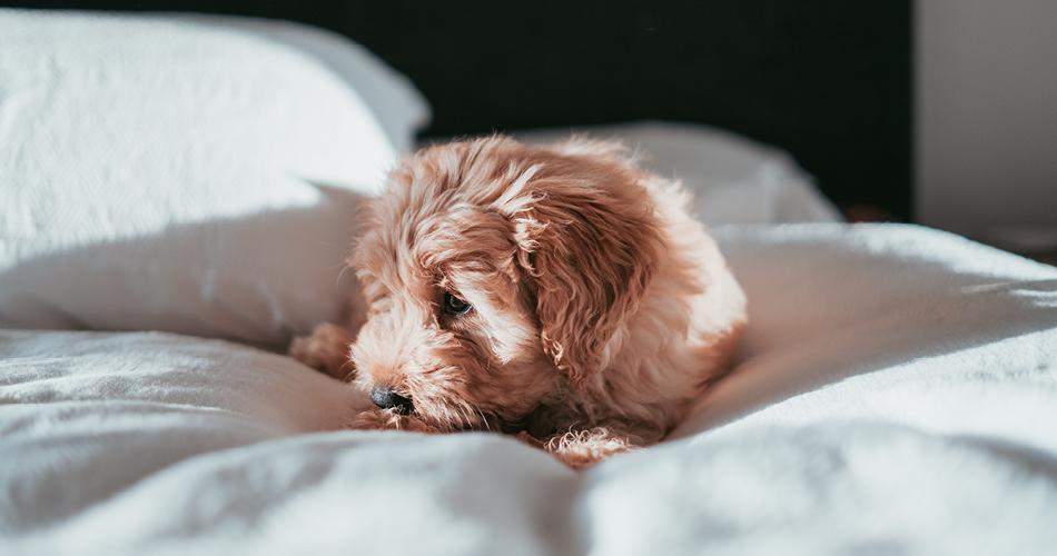 Hoeveel slaapt een puppy?
