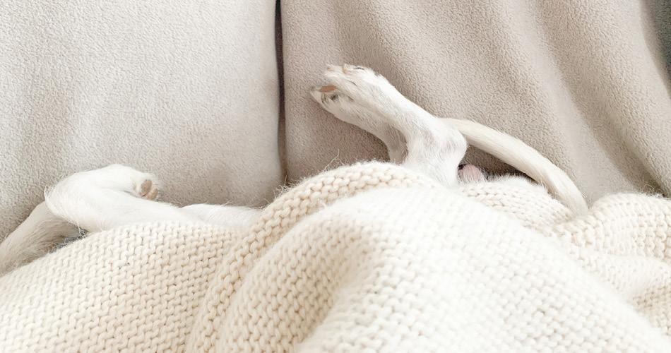 Poten hond onder deken