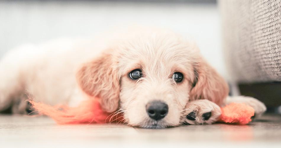 Puppy die op de grond ligt met speeltje