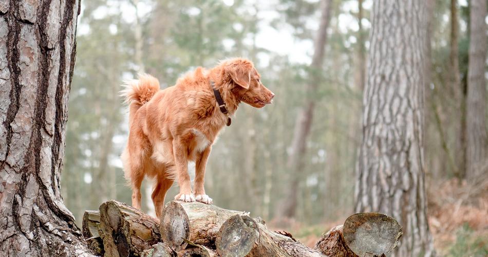 Hond uitlaten in de bossen