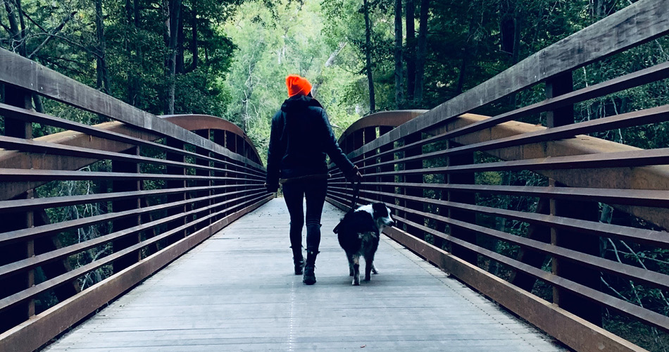 hoe vaak hond uitlaten