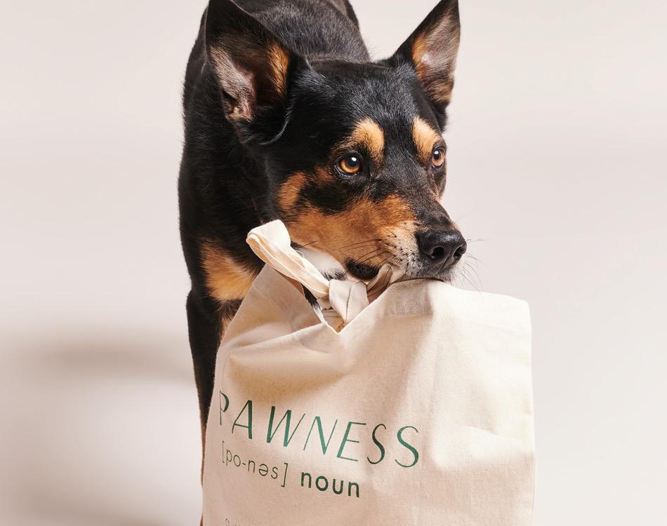 Hond met tas in mond