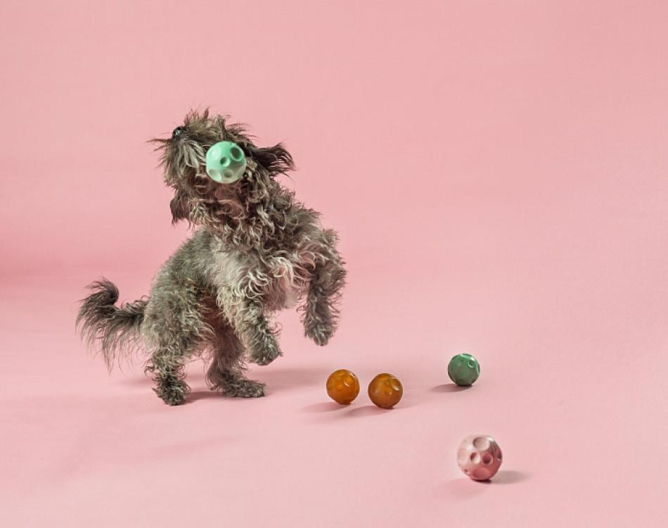 Hond die speelt met bal