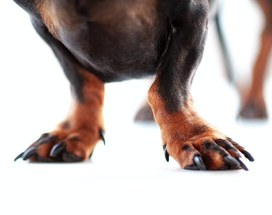BLOG_Nagels knippen bij een puppy