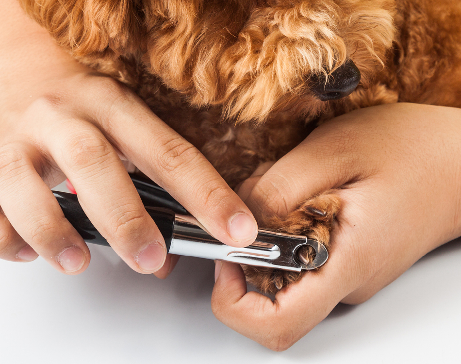 Nagels knippen hond