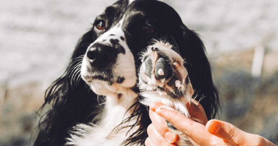 Poot hond