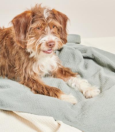 Hond liggend op dekens