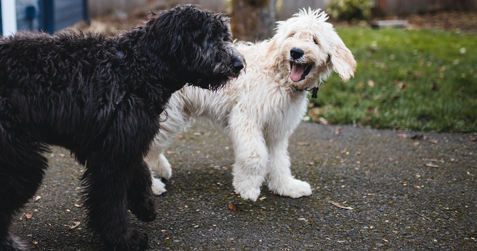Twee honden zwart en wit