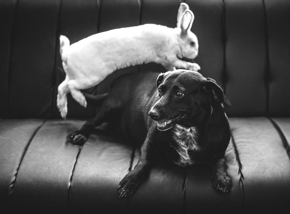 BLOG_8 tips om je hond aan een ander huisdier te laten wennen