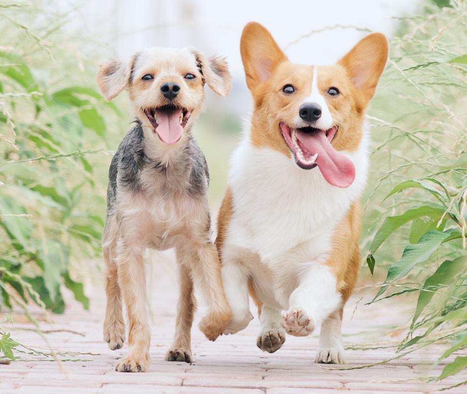 Twee honden die rennen