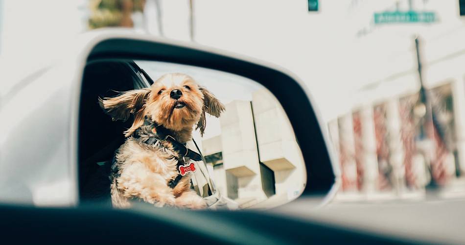 BLOG_HOND IN DE AUTO