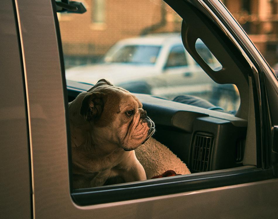 Hond in auto met gesloten raam