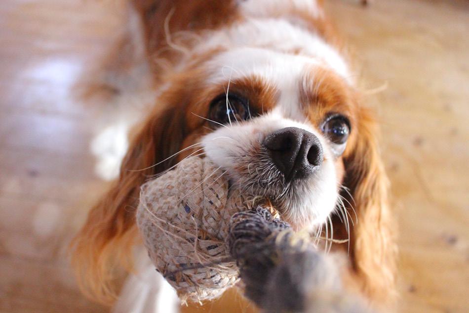 BLOG_Honden voor beginners- Deze 10 hondenrassen zijn geschikt