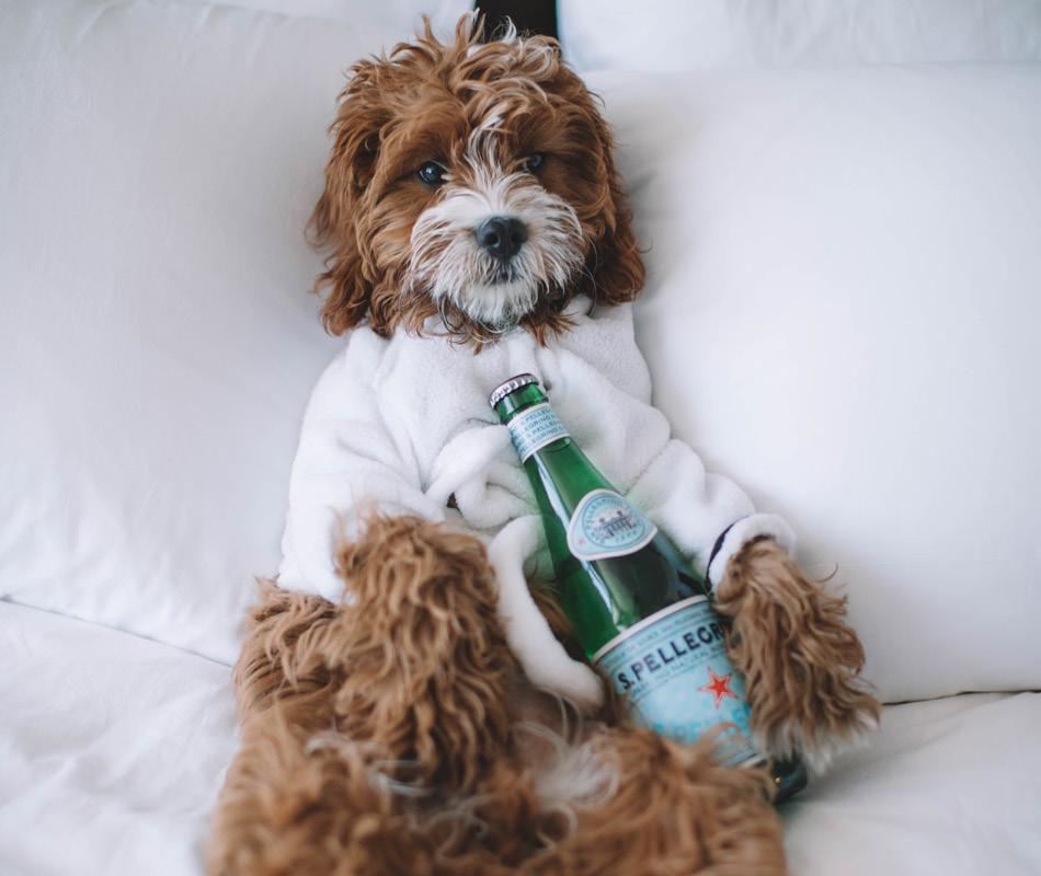 Puppy in badjas