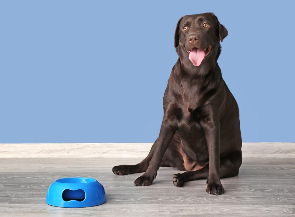 BLOG_Tip- Hier moet je op letten bij een hondenpension