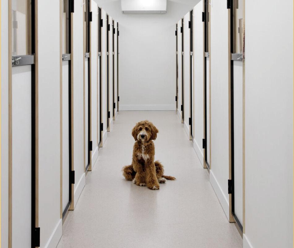 Hond zittend voor kamers