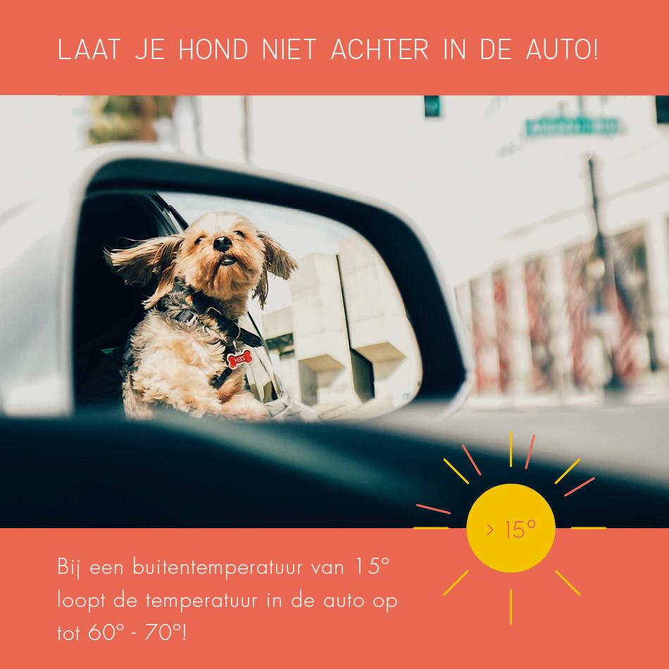 Laat je hond niet achter in de auto