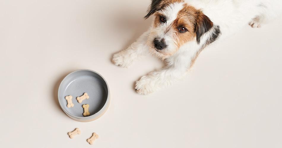 Natuurlijke voedingen voor je hond