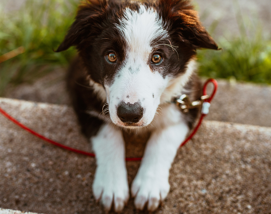 hond die op trap ligt