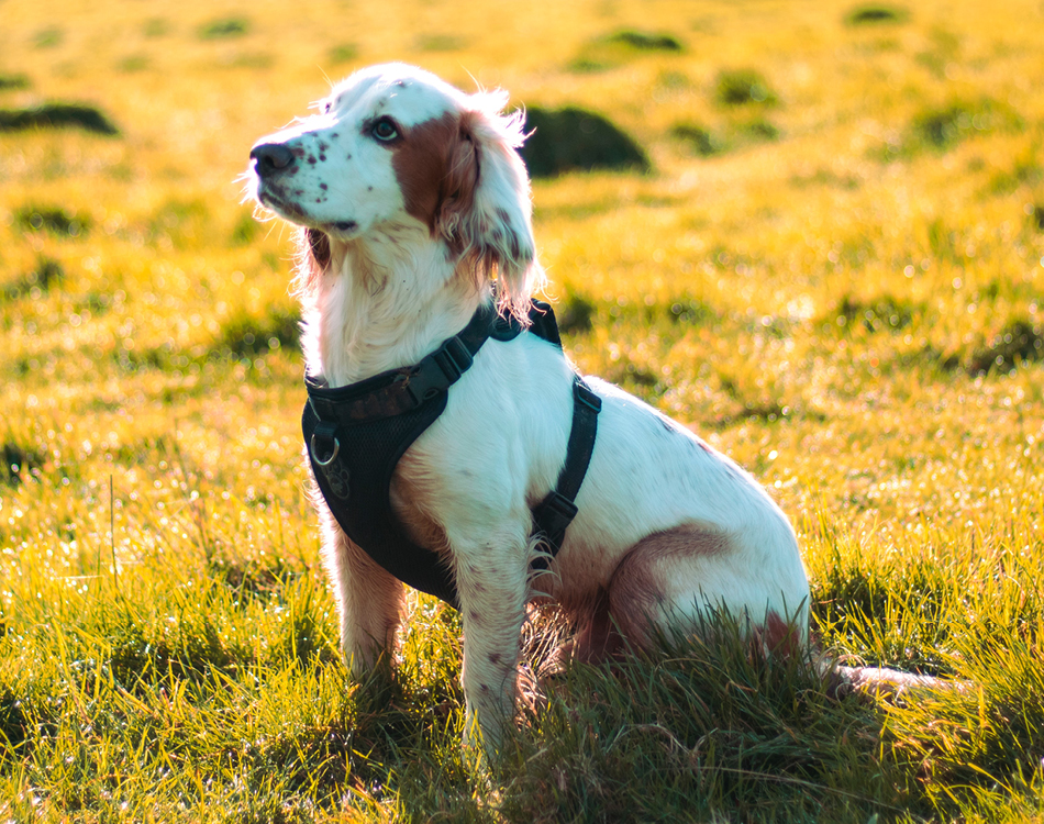 BLOG_puppy training