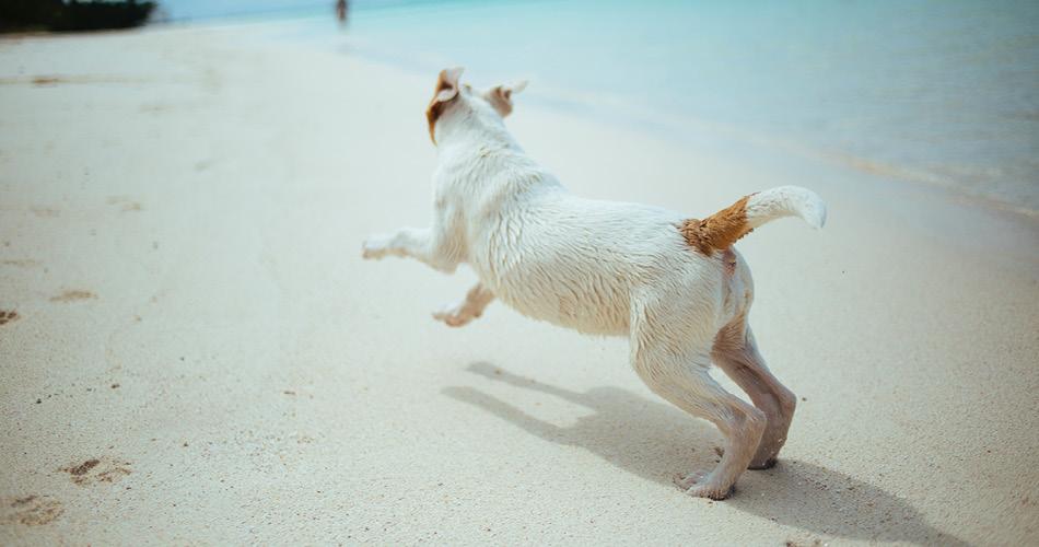 BLOG_vakantie hond
