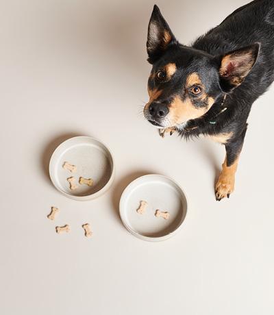 hond met witte voerbakken